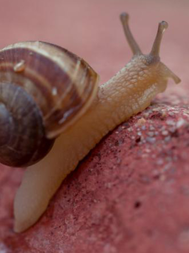 CVM People   Customer Value Management - Beginning with the Snail Trail